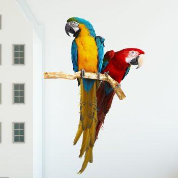muursticker-papegaai-blauw-geel-ara