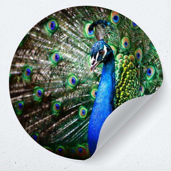 muurcirkel behangcirkel pauw dieren blauw muurdecoratie woonkamer slaapkamer bed boven accessoires