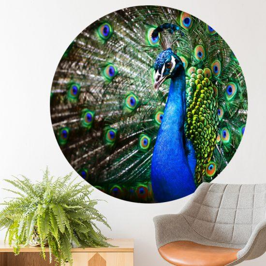 muurcirkel dier pauw vogel accessoires blauw muurdecoratie wanddecoratie inspiratie ideeen accessoires