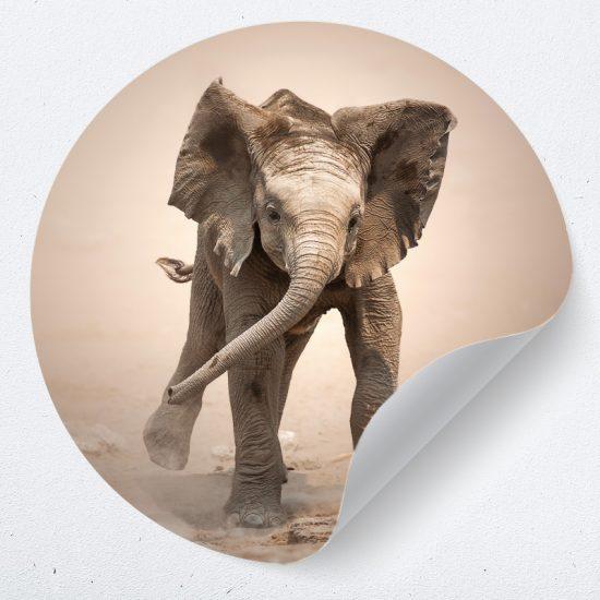 muurcirkel muursticker behangcirkel muurdecoratie kinderkamer babykamer olifant