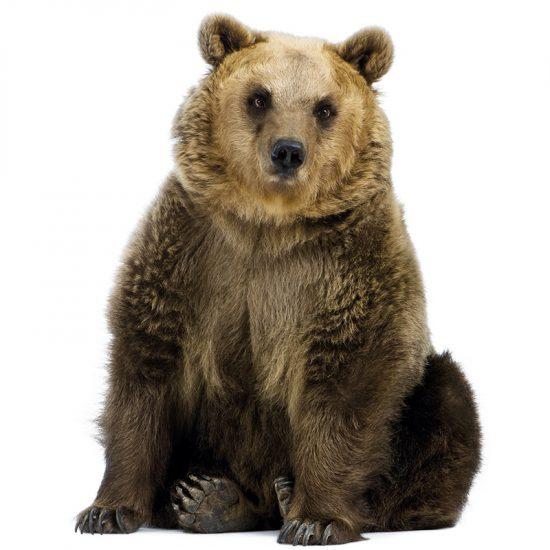 muursticker beer kinderkamer kek echte dieren bos ideeen inspiratie bear