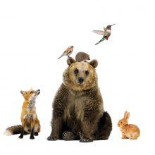 muursticker dieren uit het bos konijn egel vos vogel kolibrie mus