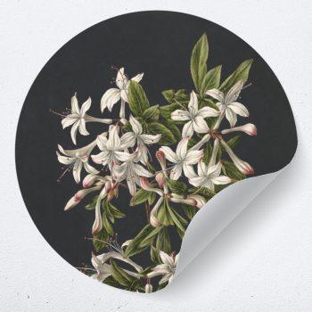 Muurcirckel bloemen sticker kunst
