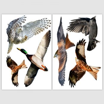 raamsticker herbruikbaar vogels eend uil arend kraai vogelbescherming bird sticker protect alert vogelstickers vogelsasd