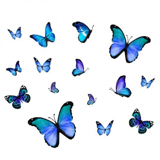 muursticker raamsticker vlinders blauw jongenskamer ideeen inspiratie vrolijk vogelbescherming