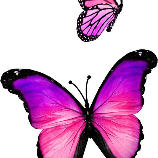 roze vlinders stickers meisjeskamer muurdecoratie